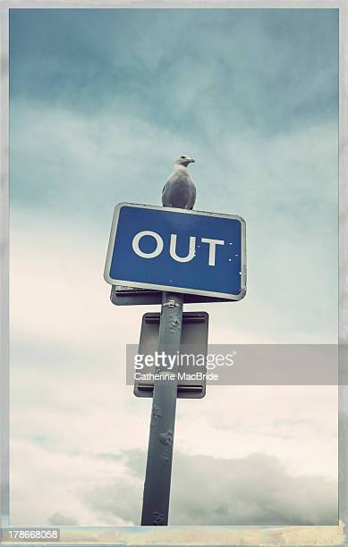 seagull on outsign - catherine macbride stock pictures, royalty-free photos & images