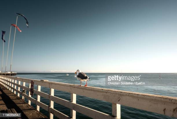 seagull on pier over sea against clear sky - christian soldatke stock pictures, royalty-free photos & images