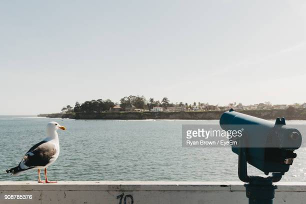 seagull on retaining wall by sea - retaining wall stock pictures, royalty-free photos & images