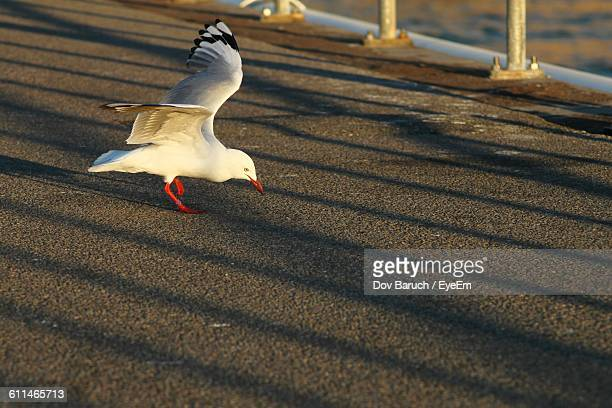 seagull on road  - barulho stock pictures, royalty-free photos & images