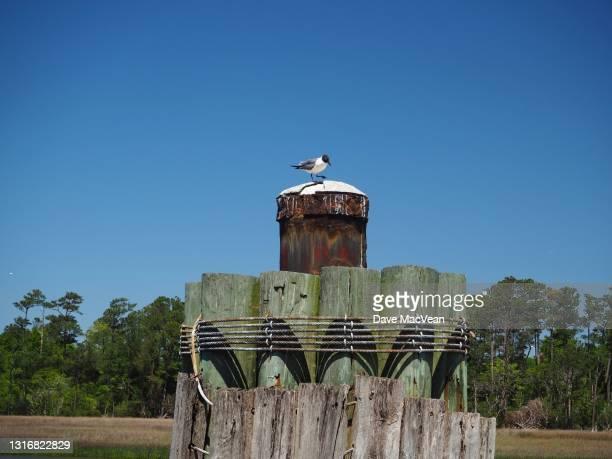 seagull on rusted piling - southport north carolina ストックフォトと画像