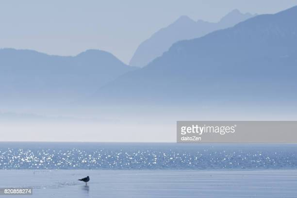 Seagull on sheet of ice with mountain range in the distance, Lake Chiemsee, Bavaria, Germany