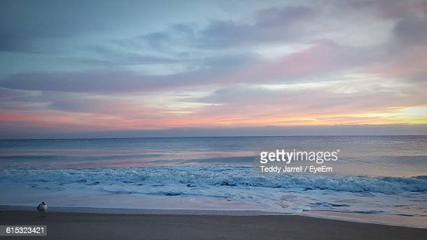 seagull on shore with sea against cloudy sky during sunset - vero beach stock pictures, royalty-free photos & images