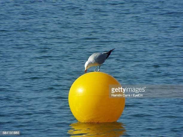 Seagull On Yellow Buoy Floating At Sea