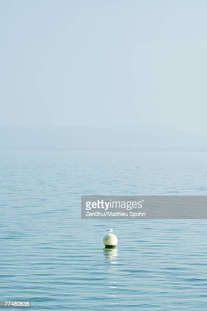 Seagull perched on buoy in lake