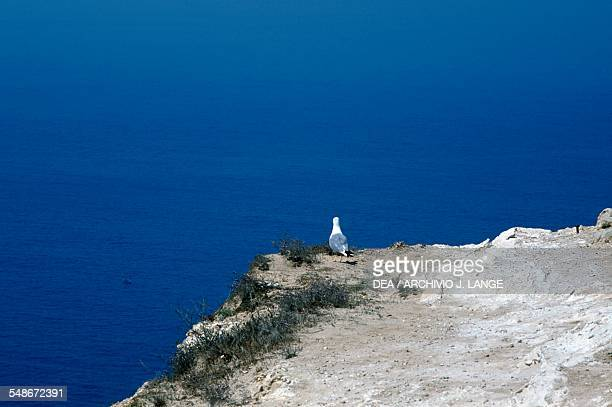 Seagull perched on the edge of the cliff at Cabo Espichel headland Province of Extremadura Portugal