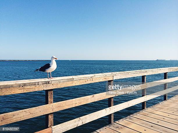 Seagull perched on wooden railing against calm blue sea
