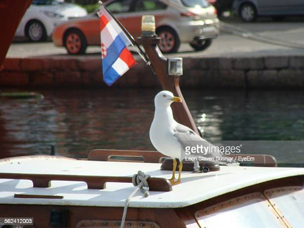 Seagull Perching On Boat
