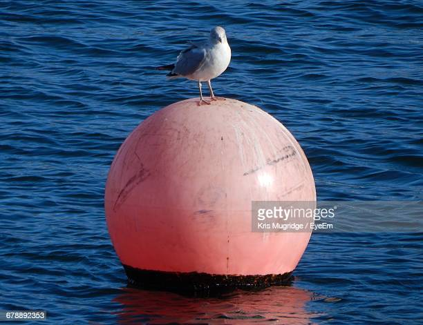 Seagull Perching On Buoy In Sea