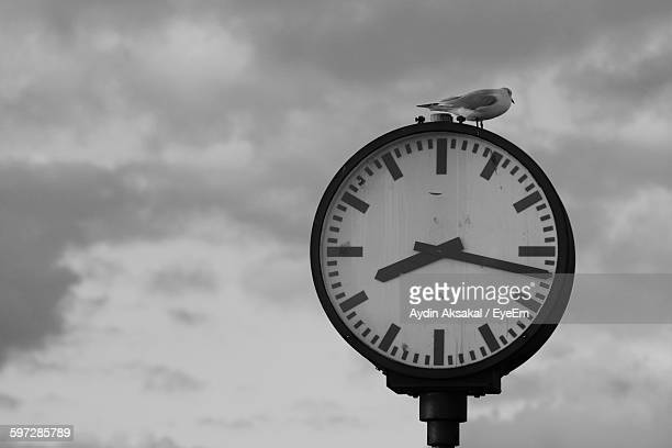 seagull perching on clock against cloudy sky - 止まる ストックフォトと画像