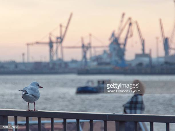 Seagull Perching On Metal Railing Against Harbor