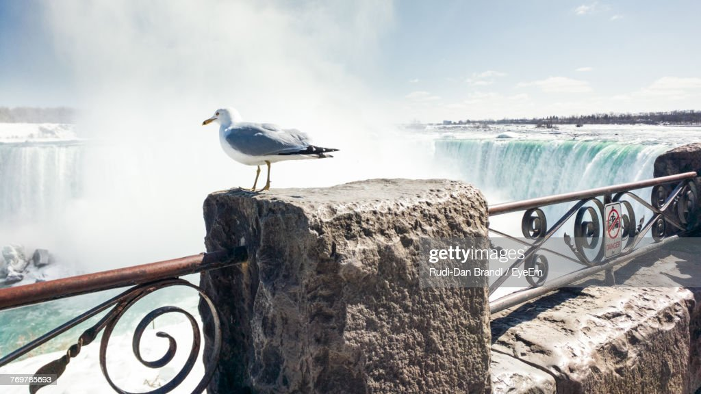 Seagull Perching On Railing Against Waterfall : ストックフォト