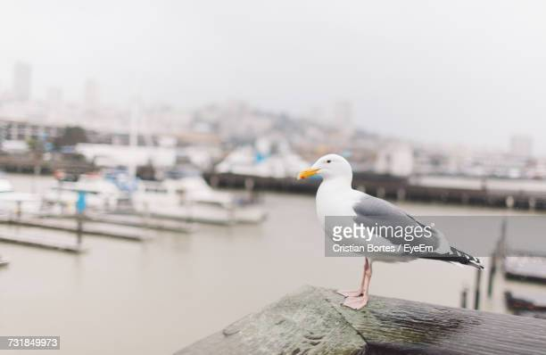seagull perching on retaining wall at harbor - bortes stock-fotos und bilder