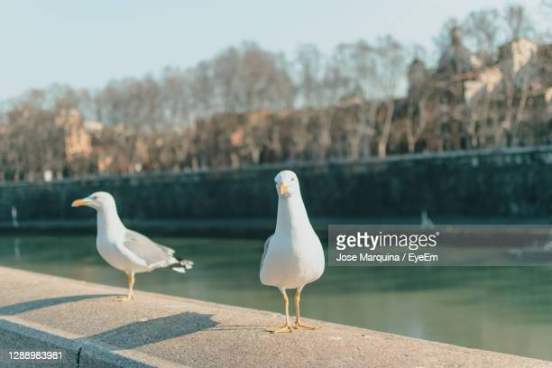 seagull perching on retaining wall by lake against sky - perching stock pictures, royalty-free photos & images