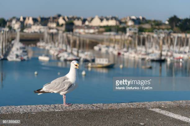 seagull perching on retaining wall by sea - marek stefunko stock pictures, royalty-free photos & images