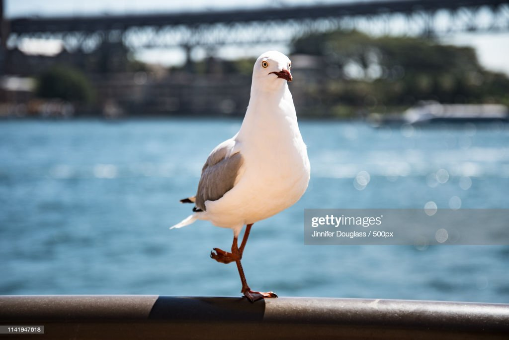 Seagull Perching On Waterfront : Stock Photo