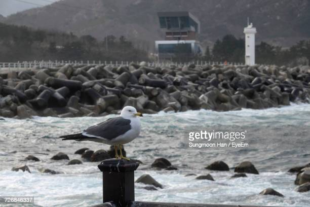 Seagull Perching On Wooden Post Against Sea And Mountain