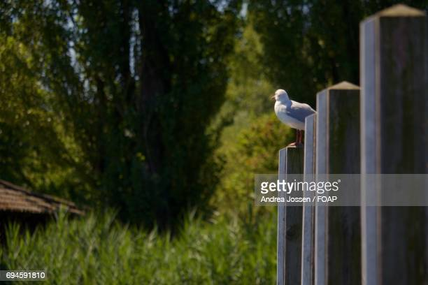 Seagull perching outdoors