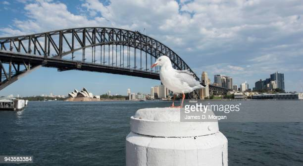 A seagull sits in the sunshine with the city background on April 9 2018 in Sydney Australia Sydney has been experiencing unseasonably high...