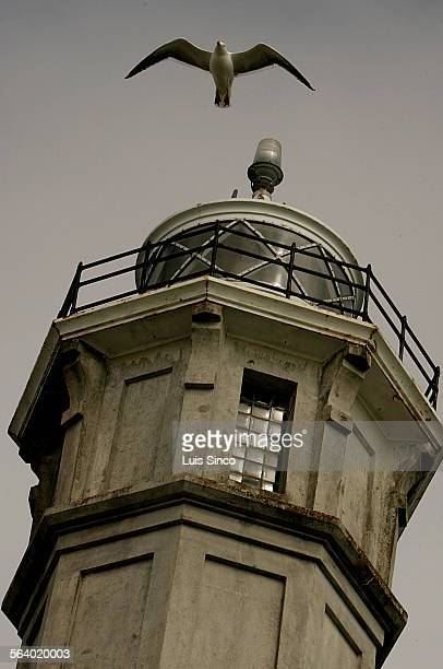 A seagull soars on the wind in front of the octagonal lighthouse on Alcatraz Island in the San Francisco Bay The 84–foot–tall lighthouse and the...