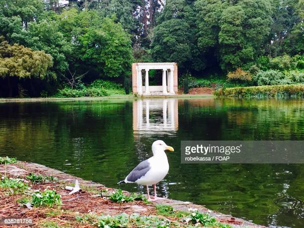 Seagull standing near lake