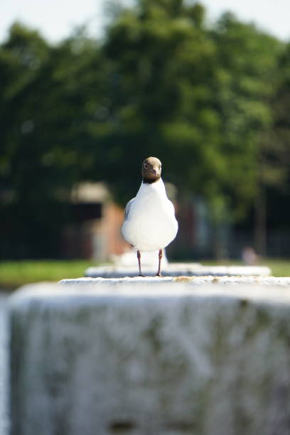 A Seagull Standing On A Pier Staring At You