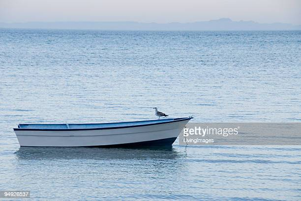 Seagull standing on empty boat in tranquil water