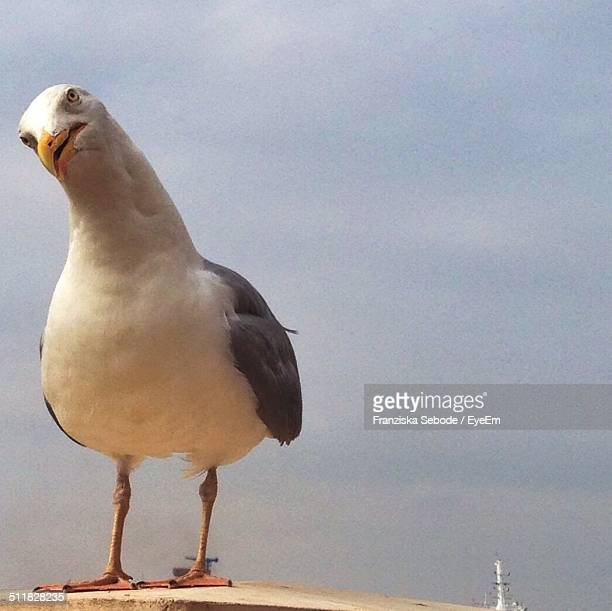 Seagull standing on wood