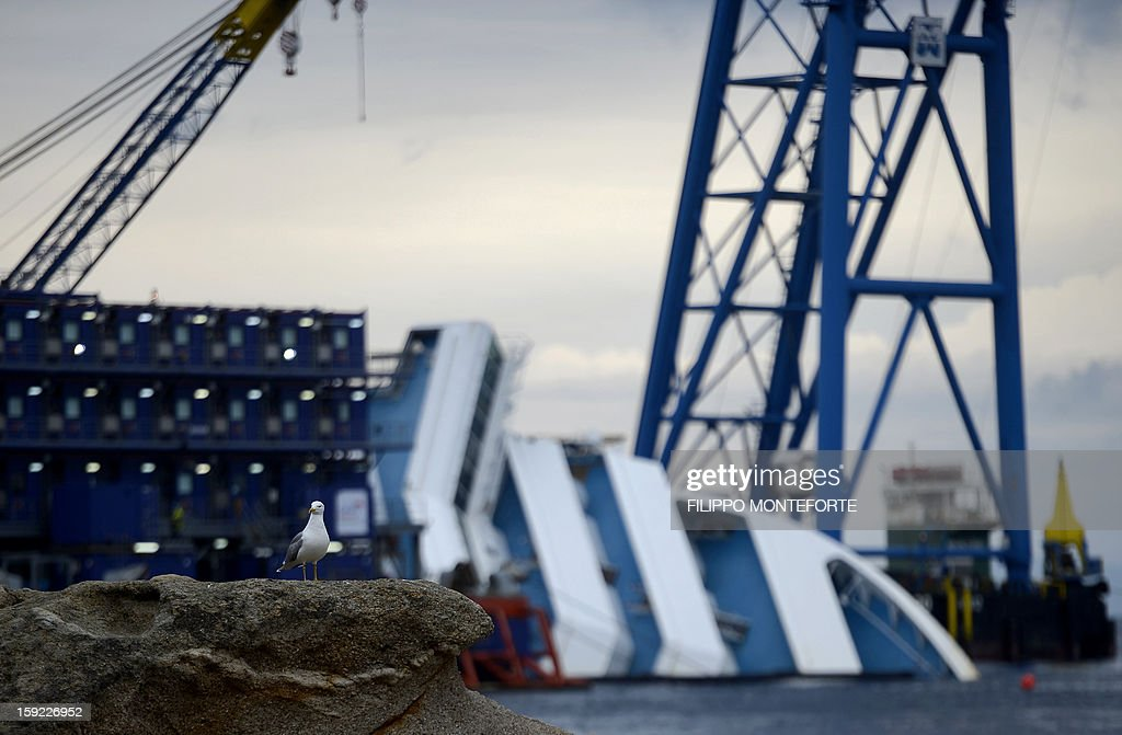 A seagull stands on a rock near the Costa Concordia cruise ship laying aground near the port on January 10, 2013 on the Italian island of Giglio. A year on from the Costa Concordia tragedy in which 32 people lost their lives, the giant cruise ship still lies keeled over on an Italian island and its captain Francesco Schettino has become a global figure of mockery.