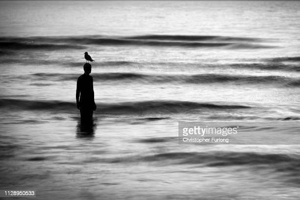 A seagull stands on a statue at Antony Gormley's art installation 'Another Place' at Crosby Beach on February 11 01 2019 in Liverpool England