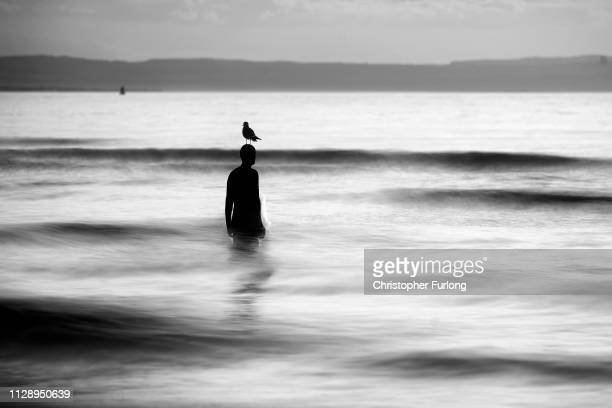 Seagull stands on a statue at Antony Gormley's art installation 'Another Place' at Crosby Beach on February 11 01, 2019 in Liverpool, England.
