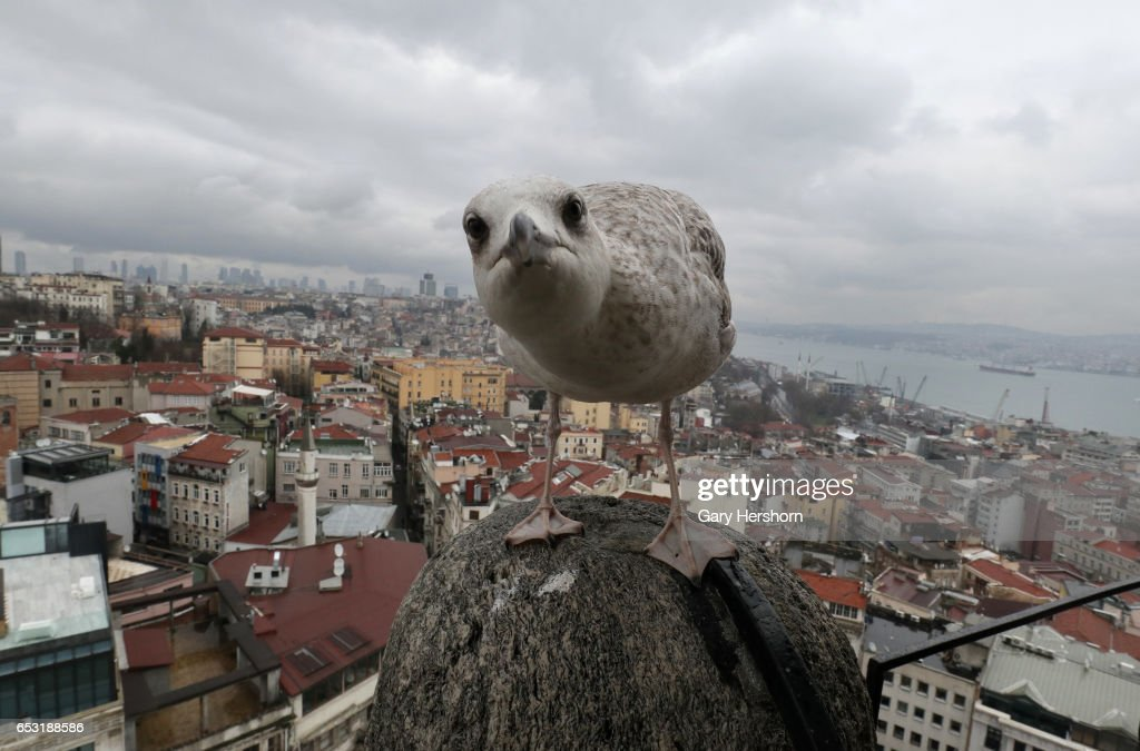 A seagull stands on the Galata Tower above the Bosphorus on March 13, 2017 in Istanbul, Turkey.