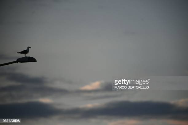 A seagull stands on the lamp at sunset on May 6 2018 in Cagliari