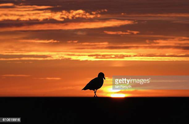 A seagull stands on the seawall on Redcar seafront on September 27 2016 in Redcar United Kingdom One year on since the SSI steel making plant at...