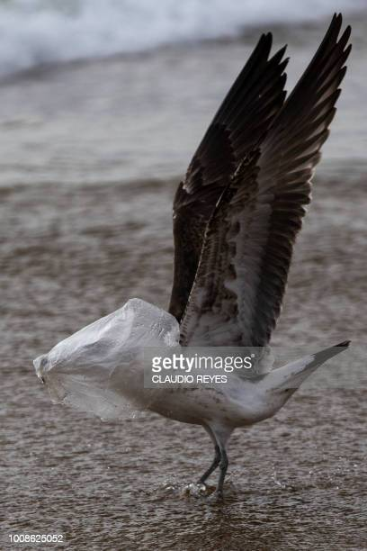 100 Seagull Plastic Photos and Premium High Res Pictures