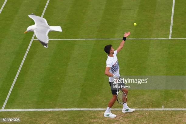 A seagull swoops past with Novak Djokovic of Serbia in action during his victory over Daniil Medvedev of Russia on Day 6 of the Aegon International...