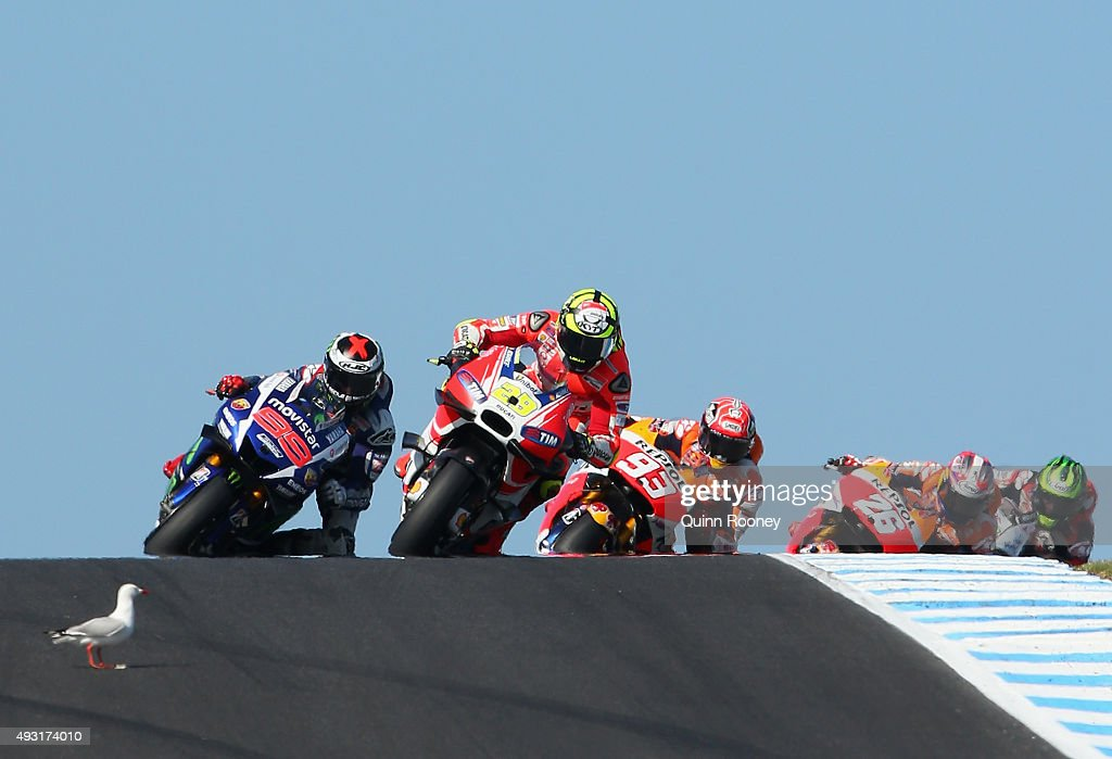 A seagull walks into the path of Andrea Iannone of Italy and the Ducati Team during the 2015 MotoGP of Australia at Phillip Island Grand Prix Circuit on October 18, 2015 in Phillip Island, Australia.