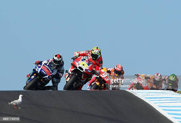 A seagull walks into the path of Andrea Iannone of Italy and the Ducati Team during the 2015 MotoGP of Australia at Phillip Island Grand Prix Circuit...