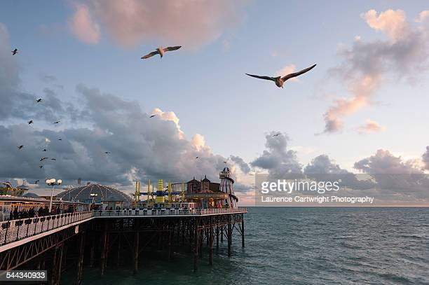 Seagulls above the Palace Pier, Brighton