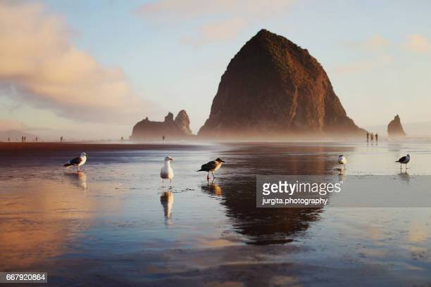 Seagulls and Haystack Rock at sunset