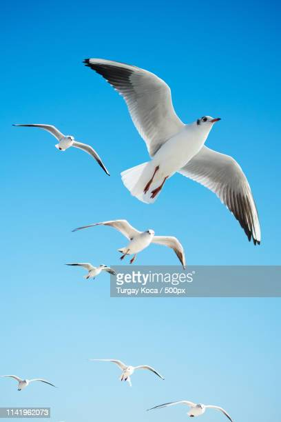 seagulls are flying in a sky - antarctic sound foto e immagini stock