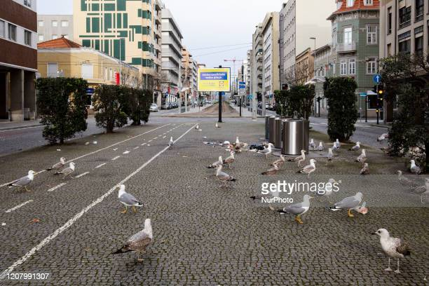 Seagulls assault trash bins in Matosinhos Porto Portugal on March 22 2020 Given the pandemic covid19 the state of emergency was declared and people...