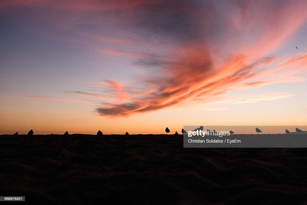 Seagulls At Beach Against Sky During Sunset : Stock-Foto