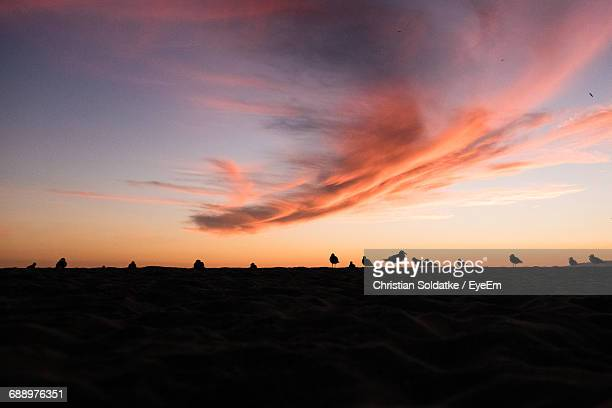 Seagulls At Beach Against Sky During Sunset