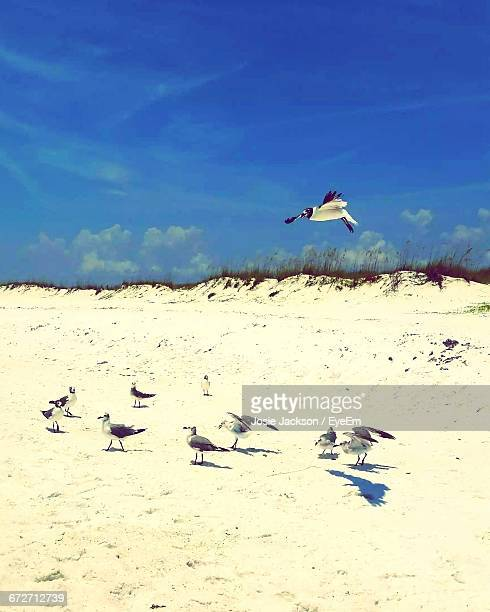 seagulls at beach against sky on sunny day - josie photos et images de collection