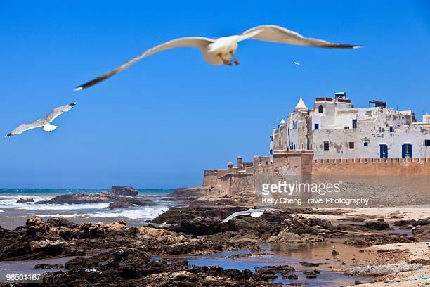Seagulls at Essaouira