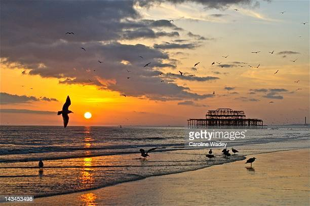 seagulls at sunset - brighton beach england stock pictures, royalty-free photos & images