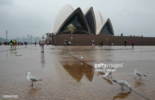 Seagulls drink out of puddles of rainwater in front of the Opera House on January 17 2020 in Sydney Australia A severe thunderstorm warning has been...