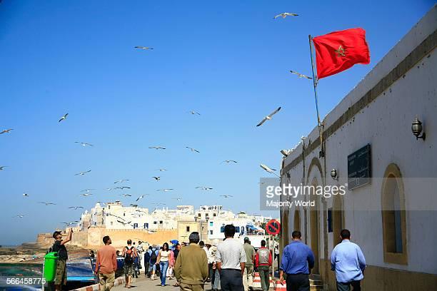 Seagulls Essaouira in Morocco