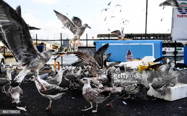 Seagulls fight for fish remains at a fish market in the Karakoy district in Istanbul on August 16 2017 / AFP PHOTO / BULENT KILIC
